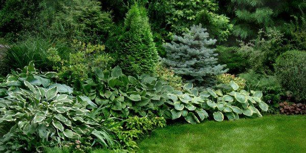 Миксбордер для озеленения забора в тенистой части сада