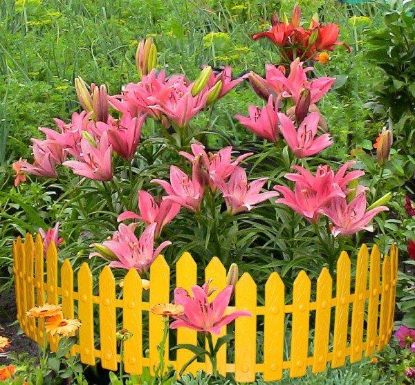 Он, как прекрасная ваза, выгодно преподнесет эксклюзивные клумбовые цветы