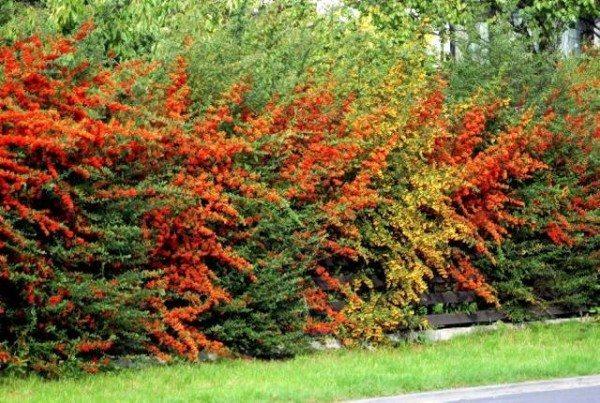 Стена свободной формы из нескольких видов растений