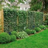 Забор из рабицы, декорированный вьющимися растениями.