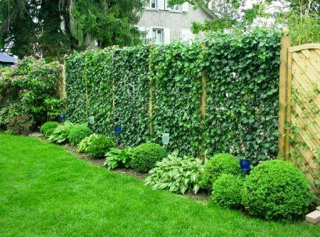 Забор с живой изгородью