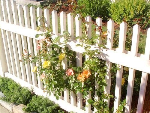 Самый простой забор из дерева