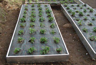Укрывной материал не дает прорастать сорнякам и препятствует испарению влаги